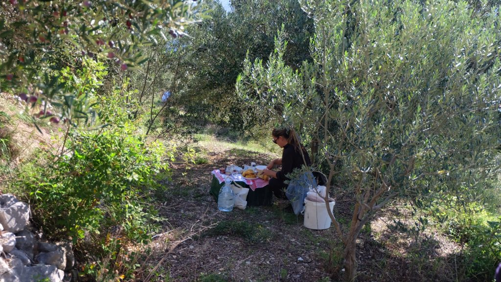 Lunch after olive picking
