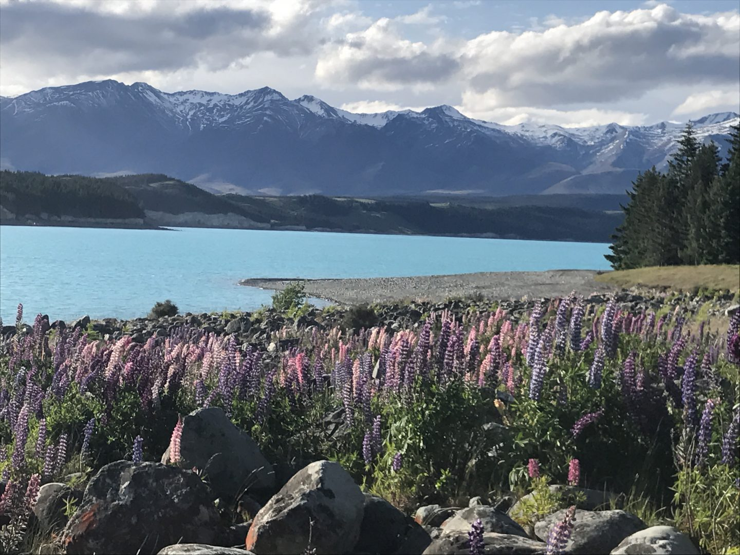 Lake Tekapo, South Island New Zealand