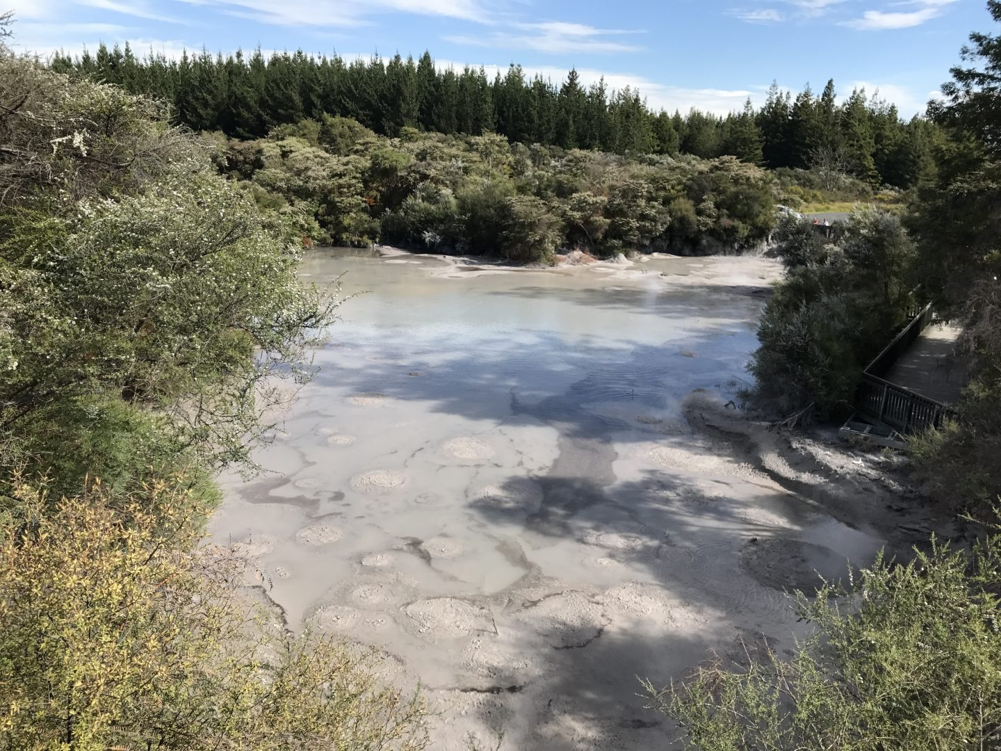 Thermal Mud pools in Rotorua